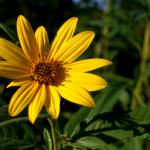 """""""WM Wild yellow flower3"""" by TaylorMadeVisions"""