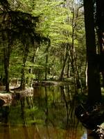flechs_water_new_forest