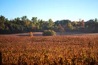 Canadian Autumn Country Fields