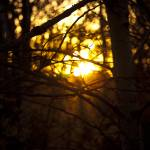 """Poplar Sunset"" by raetucker"