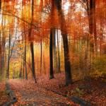 """Woodland Passage"" by JessicaJenney"