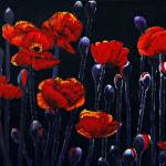 """The Poppy"" by cneartgallery"