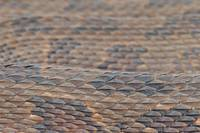 Scales of a Water Snake