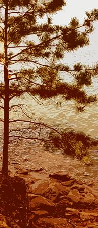 lakeshore little pine
