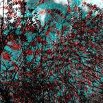"""Creative Sumac Tree Abstract Art"" by MissDawn"