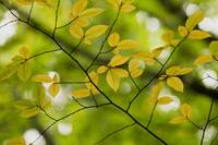 Yellow Leaves 2
