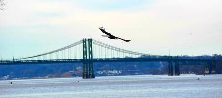 Eagle Over the Mississippi River