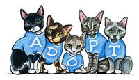 Adopt Shelter Cats
