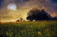 Warmth of th Harvest Moon
