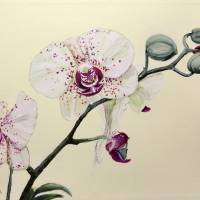 Phalaenopsis Black Panther Art Prints & Posters by Mary Palmer