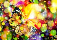 Magical Butterfly