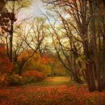 """""""Through the Woods"""" by JessicaJenney"""