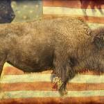 """American Buffalo"" by lightningman"