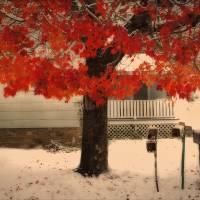 Fall Tree in Winter Light Art Prints & Posters by Joe Gemignani