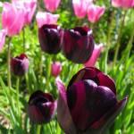 """""""Morning Garden"""" by vpicks"""