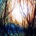 """Dead Trees"" by kimcarlsberg"