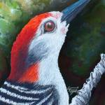 """Red the woodpecker that brings HOPE"" by ggsfunctionalart"
