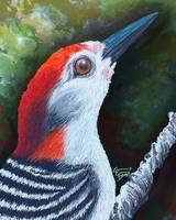 Red the woodpecker that brings HOPE