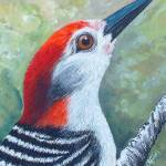 """Red the woodpecker 2"" by ggsfunctionalart"