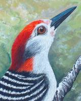 Red the woodpecker 2