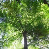 Tree Fern Art Prints & Posters by Joel Carlson