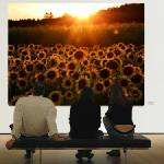"""""""Sunflowers Caught in Michigan Sunset"""" by DeniseMackie"""