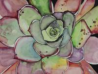 Pink Succulent Agave Watercolor Painting Artwork