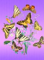 Butterflies on Pink