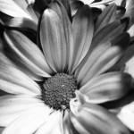 """""""Shadowed flower"""" by ArtZThings"""