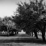 """Grove in Black and White"" by LouiseReeves"