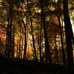 """Michigan Autumn"" by DeniseMackie"