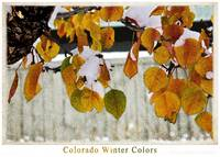 Colorado Winter Colors I