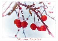 Winter Berries - Titled