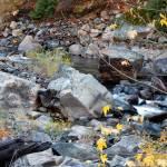 """""""River flow"""" by Mun_Sing"""
