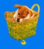 Puppy in a basket and a fallen toy