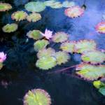 """Water Lilies copy"" by JohnRivera"
