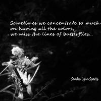 The Lines of Butterflies Art Prints & Posters by Sandra Lynn Sparks