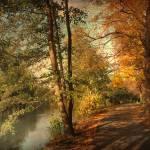 """Artful Autumn"" by JessicaJenney"