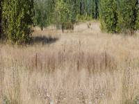Wetlands Meadow