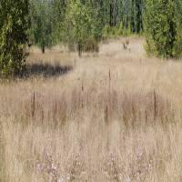 Wetlands Meadow by Patricia Schnepf