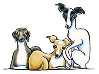 Italian Greyhound Trio