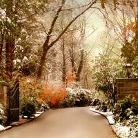 Winter Greets Autumn Art Prints & Posters by Jessica Jenney