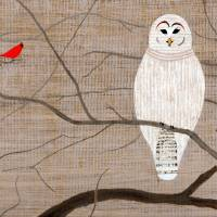 Barred Owl Art Prints & Posters by Stephen Twite