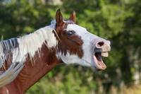 Funny-Horse Face