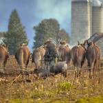 """amish"" by hopecreek"