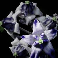 Blue Crown Flower Art Prints & Posters by Joe Vittek