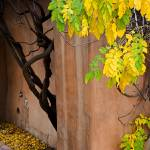 """Twisted Autumn Leaves CV"" by robertmeyerslussier"