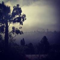 Laguna Beach Fog - Palm with Canyon
