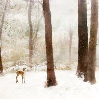 Winter Whimsy Art Prints & Posters by Jessica Jenney