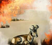 Pronghorn Repose
